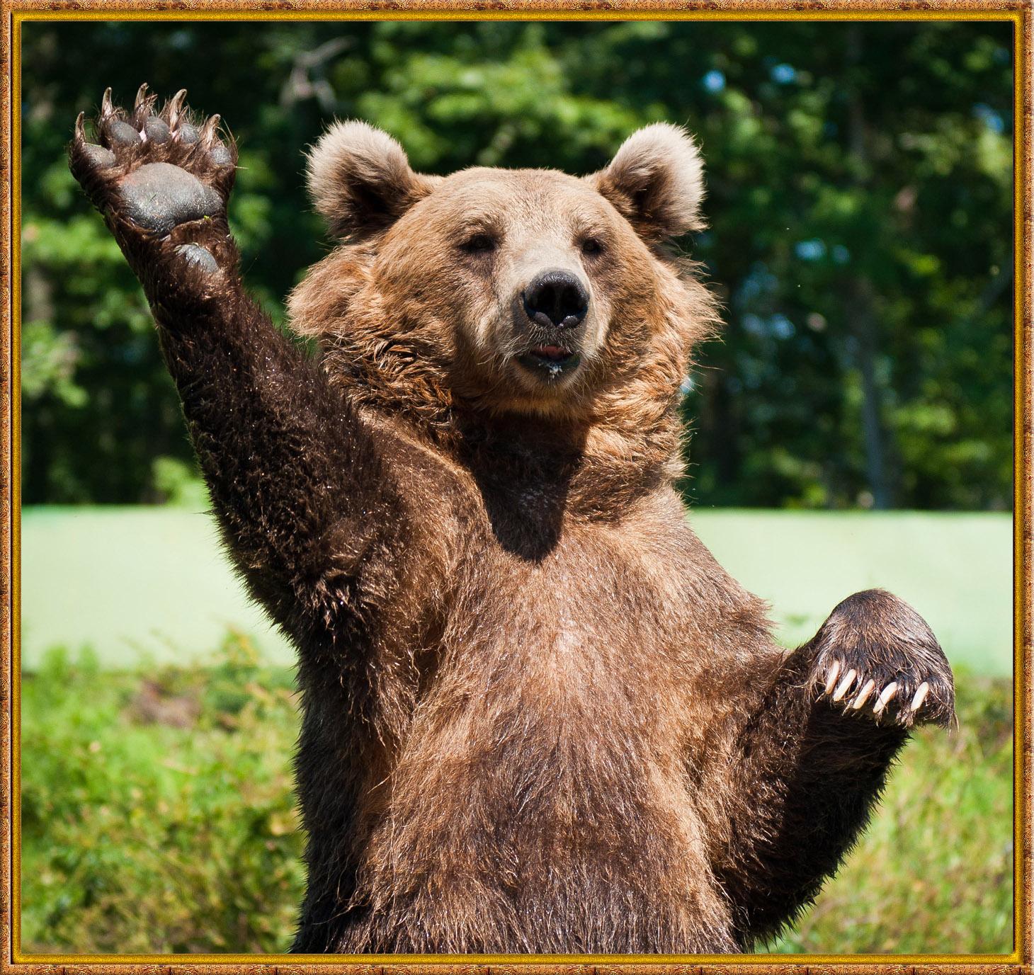 образом, очень прикольное необычное фото медвежат шары, гирлянды украшения