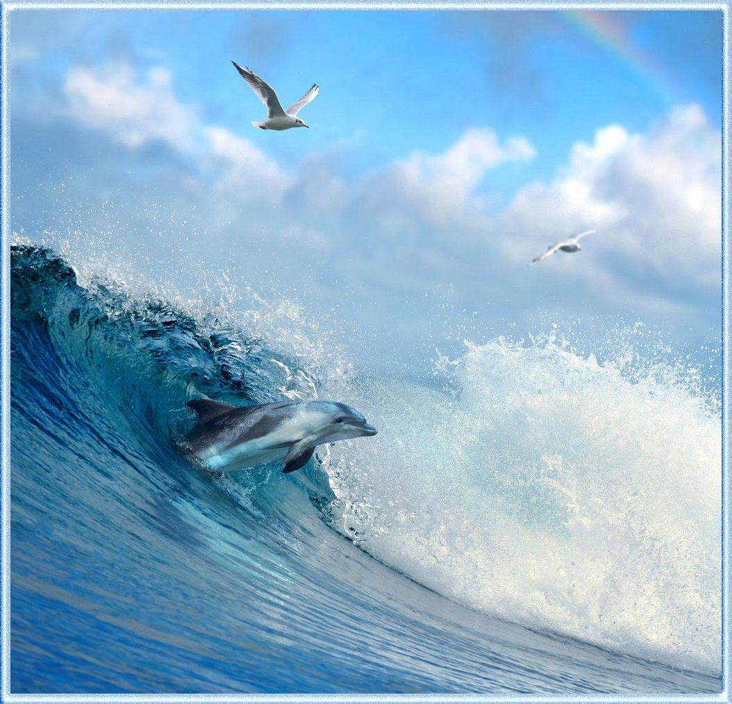 Красивые картинки дельфинов