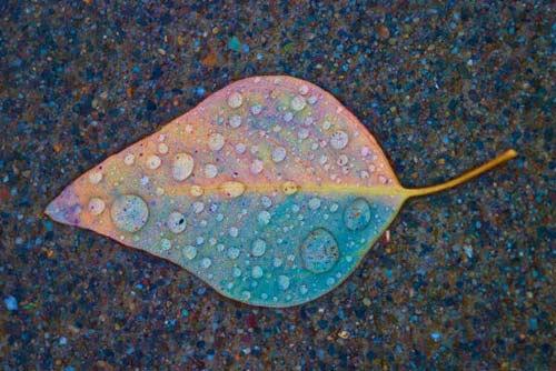 листок на асфальте