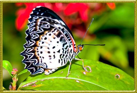 интересная бабочка