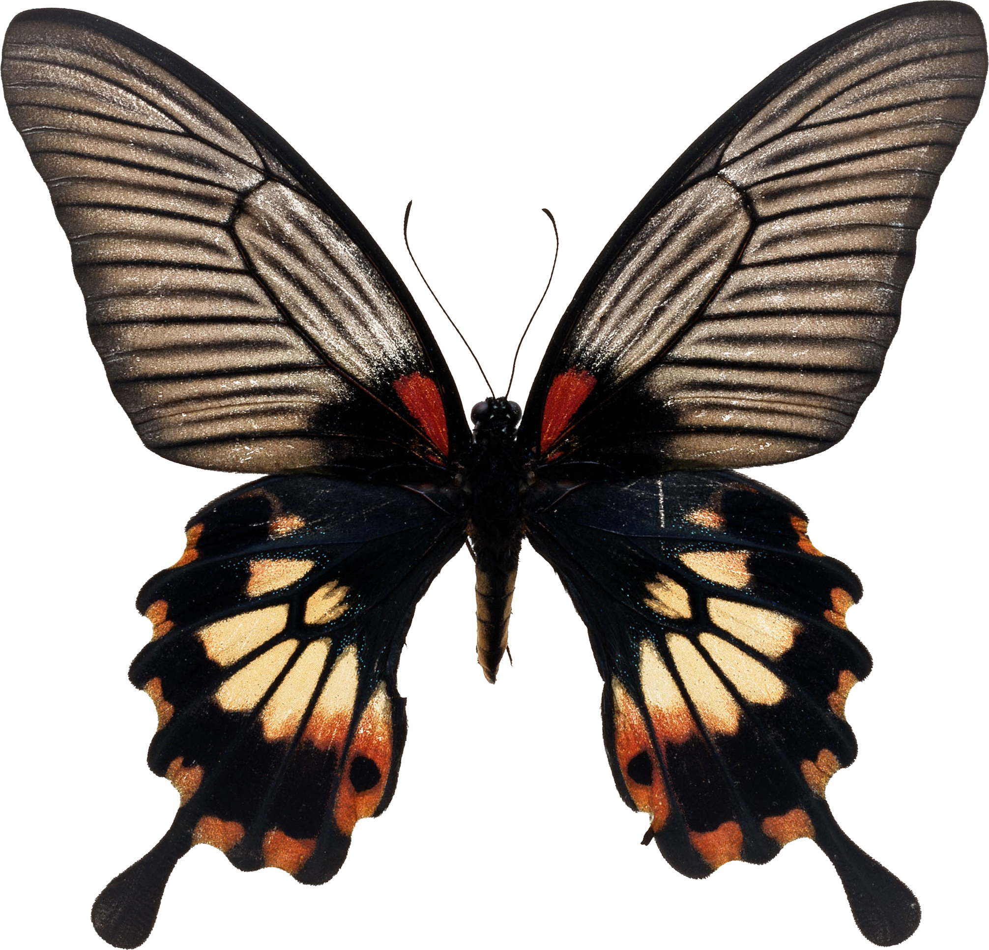 Эффект бабочки 2004 смотреть онлайн бесплатно