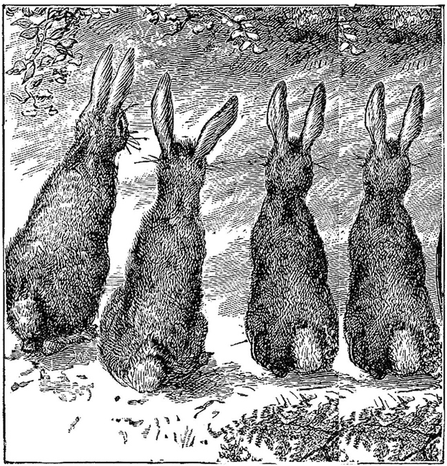 рисунок зайцев